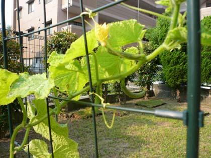 菜園05.JPG